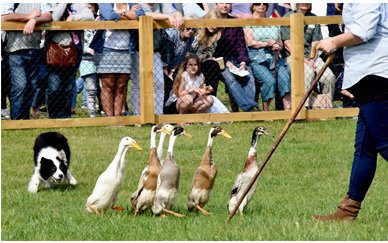 The Suffolk Show at Trinity Park